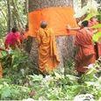 Buddhism-ecol 2